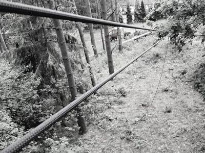Lina puszczona przez las
